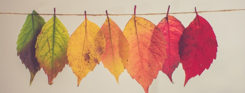 fall crafts to try with kids this year